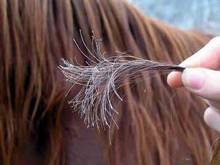Saç Kırıkları