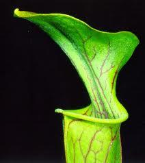 yaprak sekilli modern vazo ornekleri En ilginç Vazo Modelleri 12