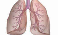 Akciğer