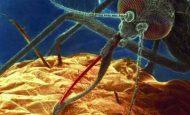 Sıtma (Malarya)