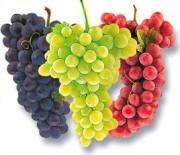 uzumün faydaları 1 Bu Besinler Ömrünüzü Uzatır 1