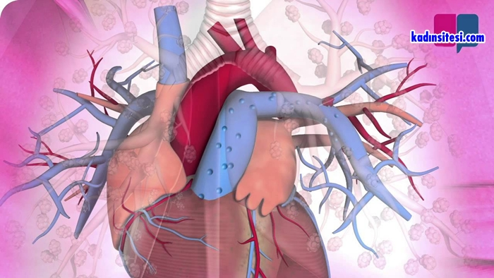 Pulmoner Emboli Ve Derin Ven Trombozu Nedir?