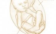 35.Hafta Hamilelik